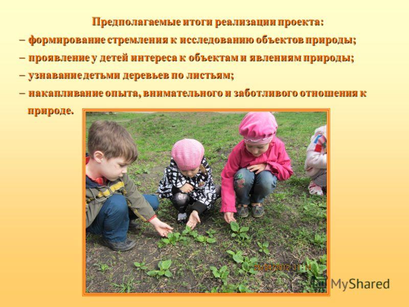 Предполагаемые итоги реализации проекта: ф формирование стремления к исследованию объектов природы; п проявление у детей интереса к объектам и явлениям природы; у узнавание детьми деревьев по листьям; н накапливание опыта, внимательного и заботливого