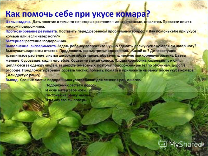 Как помочь себе при укусе комара? Цель и задача. Дать понятие о том, что некоторые растения – лекарственные, они лечат. Провести опыт с листом подорожника. Прогнозирование результата. Поставить перед ребенком проблемный вопрос: « Как помочь себе при