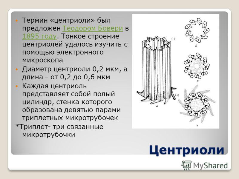 Центриоли Термин «центриоли» был предложен Теодором Бовери в 1895 году. Тонкое строение центриолей удалось изучить с помощью электронного микроскопаТеодором Бовери 1895 году Диаметр центриоли 0,2 мкм, а длина - от 0,2 до 0,6 мкм Каждая центриоль пред