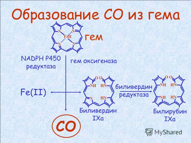 Типы гем оксигеназ (НО): 1. НО-1 (индуцируемая) – защита клетки от оксидативного стресса антиоксидантное действие противовоспалительное действие подавление апоптоза 2. НО-2 (конститутивная) – работает постоянно. Обнаружена в ЦНС и эндотелии сосудов.