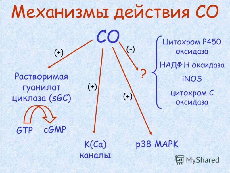 Образование СО из гема CO Fe(II) гем оксигеназа биливердин редуктаза NADPH P450 редуктаза гем FeII N N N N Биливердин IXa N НNНN NНNН НNНN ОО Билирубин IXa NНNН НNНN NНNН НNНN ОО
