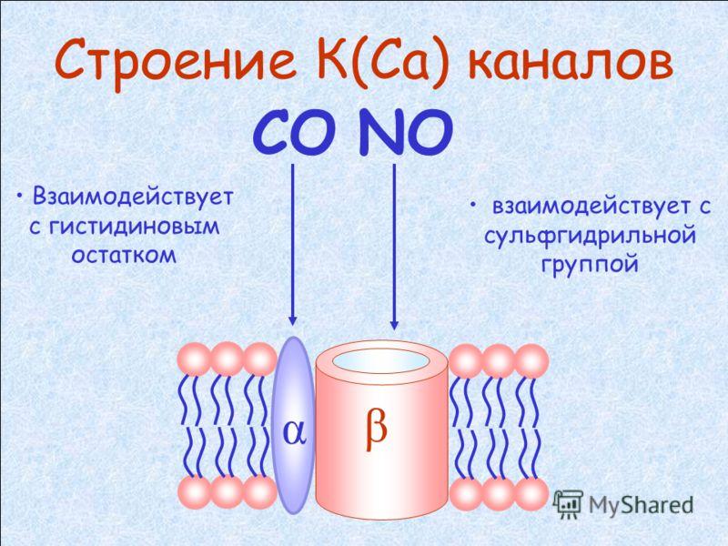 сGMP-независимые механизмы расслабления гладких мышц сосуда 1. Активация K(Ca) каналов (приводящая к гиперполяризации) 2. Цитохром Р450-зависимый механизм 3. Эндотелин-зависимый механизм ? проводимости К(Са) каналов стимулируется: концентрации Са вну