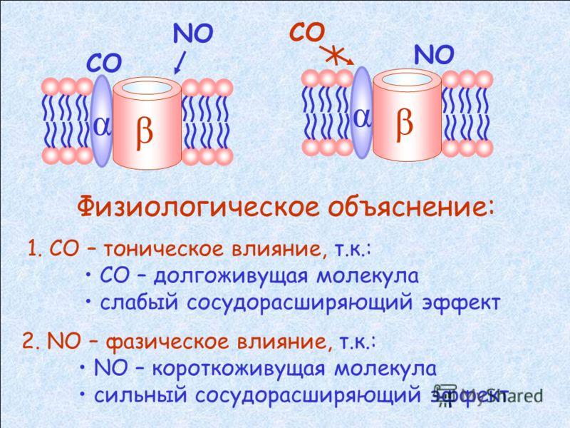 Строение К(Ca) каналов α β СОNO Взаимодействует с гистидиновым остатком взаимодействует с сульфгидрильной группой