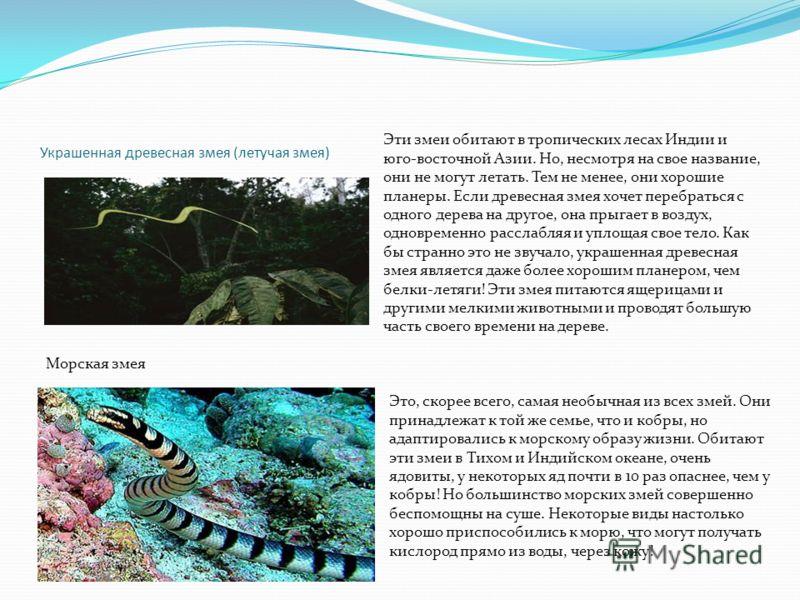 Украшенная древесная змея (летучая змея) Эти змеи обитают в тропических лесах Индии и юго-восточной Азии. Но, несмотря на свое название, они не могут летать. Тем не менее, они хорошие планеры. Если древесная змея хочет перебраться с одного дерева на