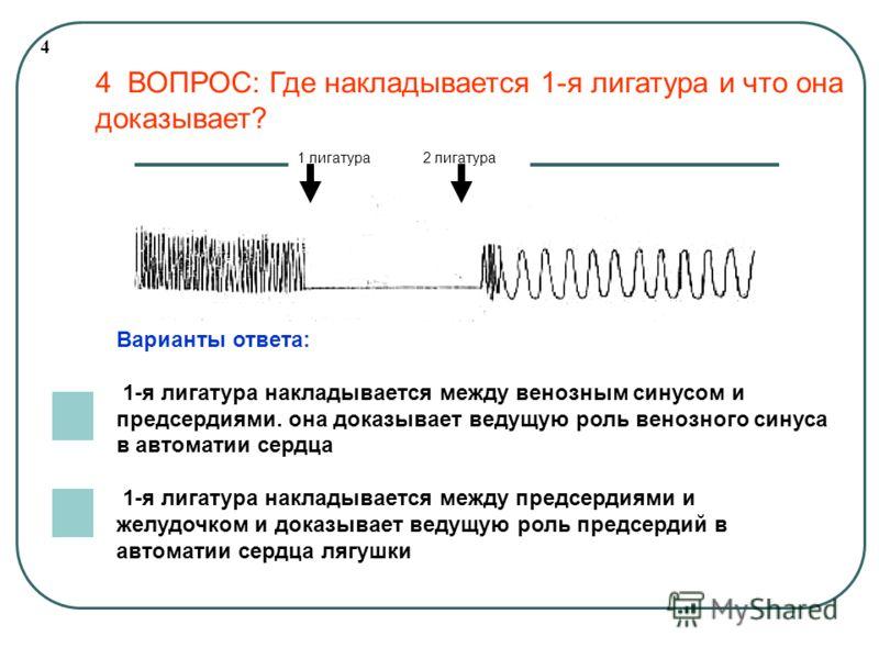 4 1 лигатура 2 лигатура Варианты ответа: 1-я лигатура накладывается между венозным синусом и предсердиями. она доказывает ведущую роль венозного синуса в автоматии сердца 1-я лигатура накладывается между предсердиями и желудочком и доказывает ведущую