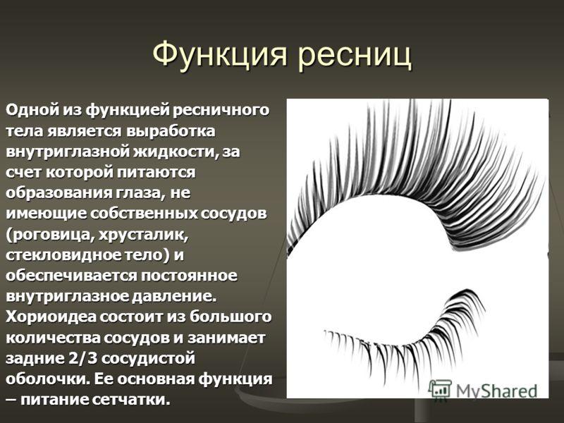 Функция ресниц Одной из функцией ресничного тела является выработка внутриглазной жидкости, за счет которой питаются образования глаза, не имеющие собственных сосудов (роговица, хрусталик, стекловидное тело) и обеспечивается постоянное внутриглазное