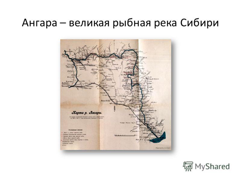 Ангара – великая рыбная река Сибири