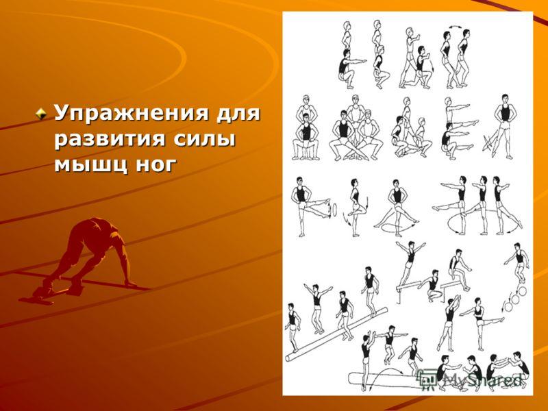Упражнения для развития силы мышц ног