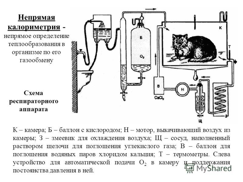К – камера; Б – баллон с кислородом; Н – мотор, выкачивающий воздух из камеры; З – змеевик для охлаждения воздуха; Щ – сосуд, наполненный раствором щелочи для поглощения углекислого газа; В – баллон для поглощения водяных паров хлоридом кальция; Т –