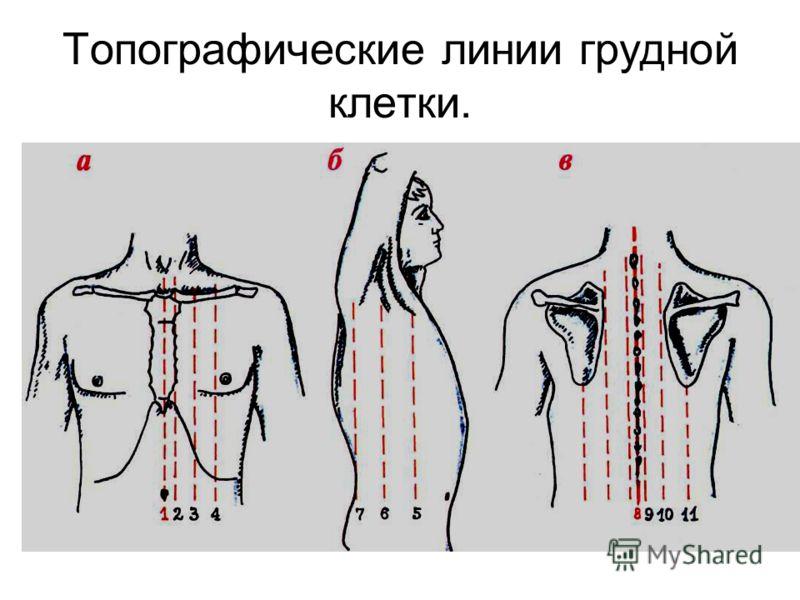 Топографические линии грудной клетки.