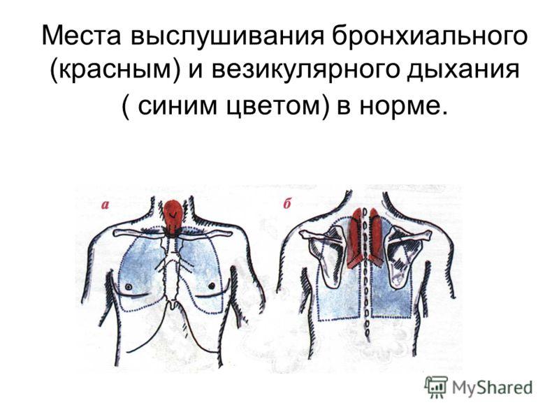 Места выслушивания бронхиального (красным) и везикулярного дыхания ( синим цветом) в норме.