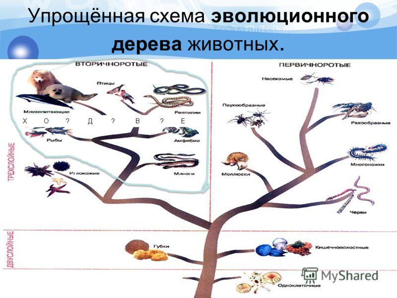 Упрощённая схема эволюционного