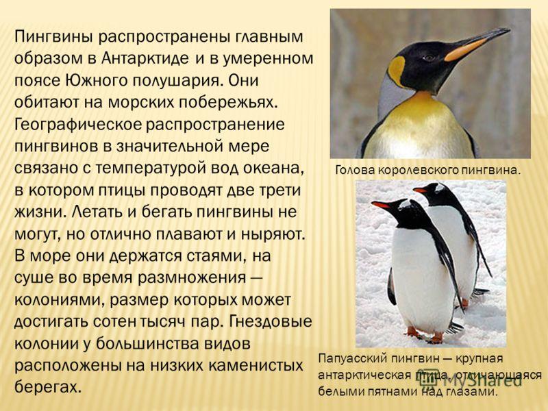Пингвины распространены главным образом в Антарктиде и в умеренном поясе Южного полушария. Они обитают на морских побережьях. Географическое распространение пингвинов в значительной мере связано с температурой вод океана, в котором птицы проводят две