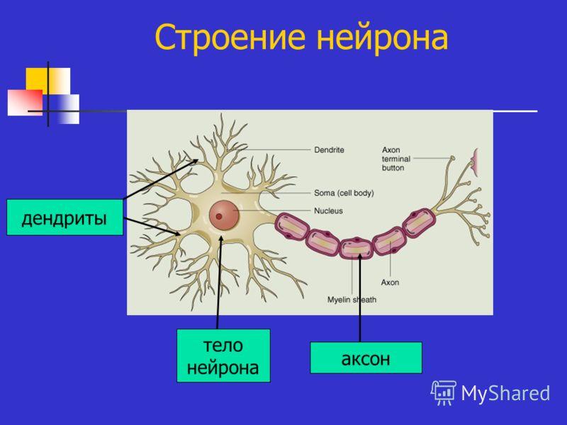 Нервные картинки