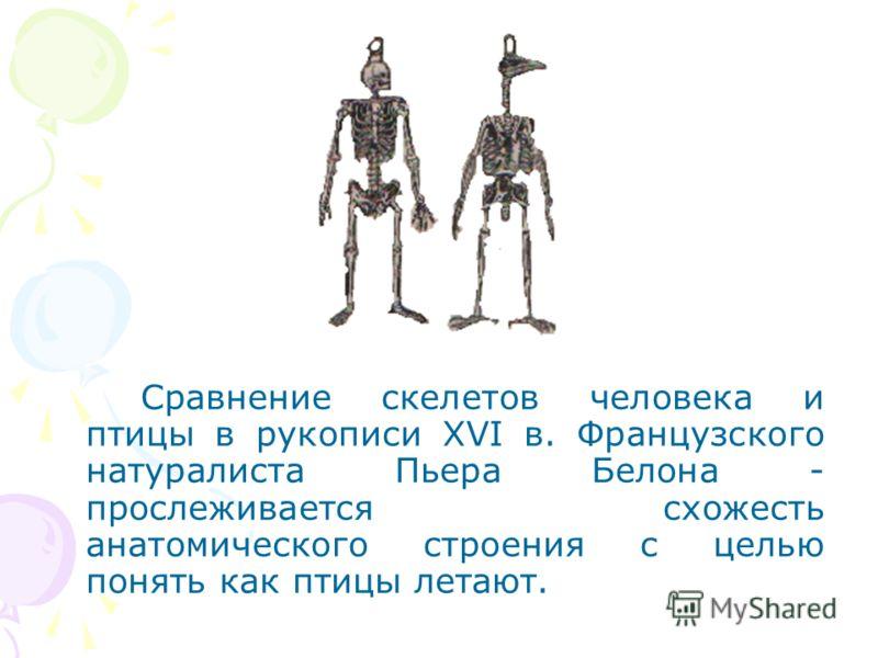 Сравнение скелетов человека и птицы в рукописи XVI в. Французского натуралиста Пьера Белона - прослеживается схожесть анатомического строения с целью понять как птицы летают.