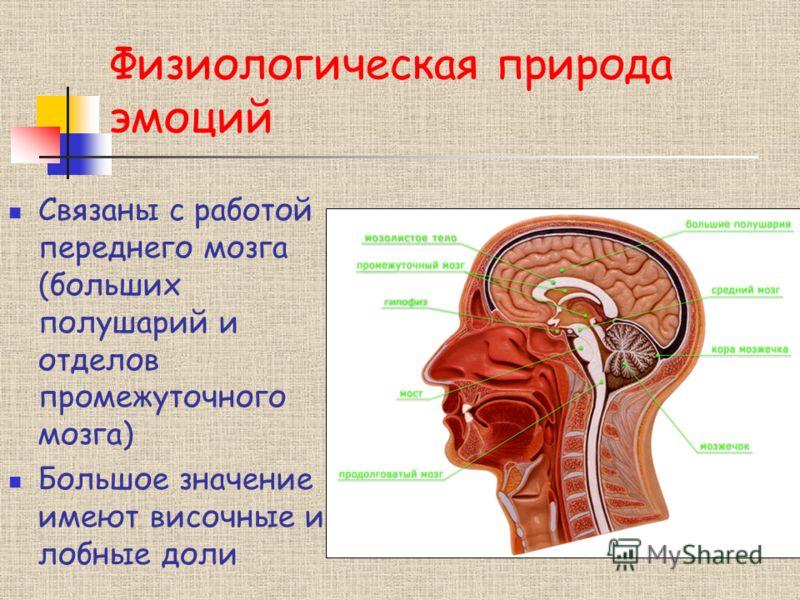 Физиологическая природа эмоций Связаны с работой переднего мозга (больших полушарий и отделов промежуточного мозга) Большое значение имеют височные и лобные доли
