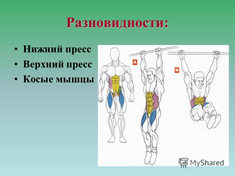 Разновидности: Нижний пресс Верхний пресс Косые мышцы