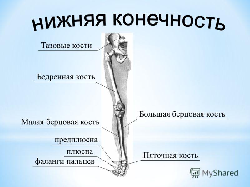 Презентация на тему:  «Россия – Родина моя!» Работу.