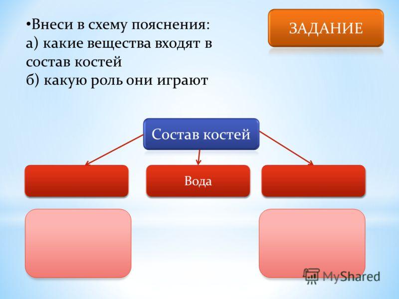 Внеси в схему пояснения: а) какие вещества входят в состав костей б) какую роль они играют Вода
