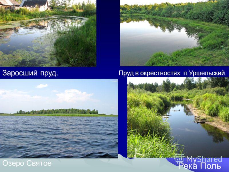 Заросший пруд. Пруд в окрестностях п.Уршельский. Озеро Святое Река Поль