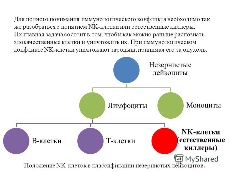 Незернистые лейкоциты Лимфоциты В-клеткиТ-клетки NK-клетки (естественные киллеры) Моноциты Для полного понимания иммунологического конфликта необходимо так же разобраться с понятием NK-клетки или естественные киллеры. Их главная задача состоит в том,