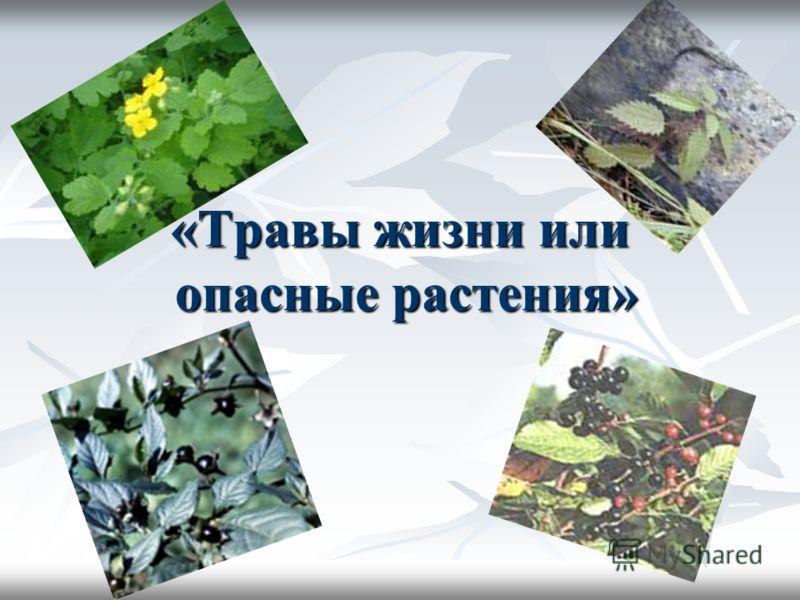 «Травы жизни или опасные растения»