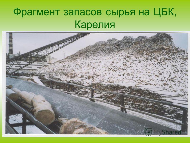 Фрагмент запасов сырья на ЦБК, Карелия