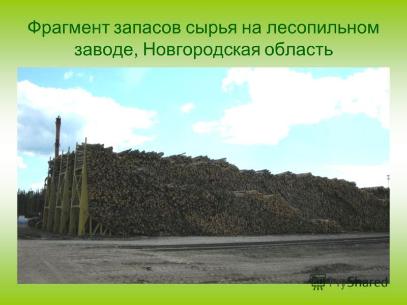 Фрагмент запасов сырья на лесопильном заводе, Новгородская область