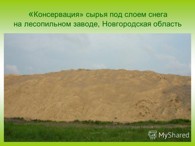 « Консервация» сырья под слоем снега на лесопильном заводе, Новгородская область