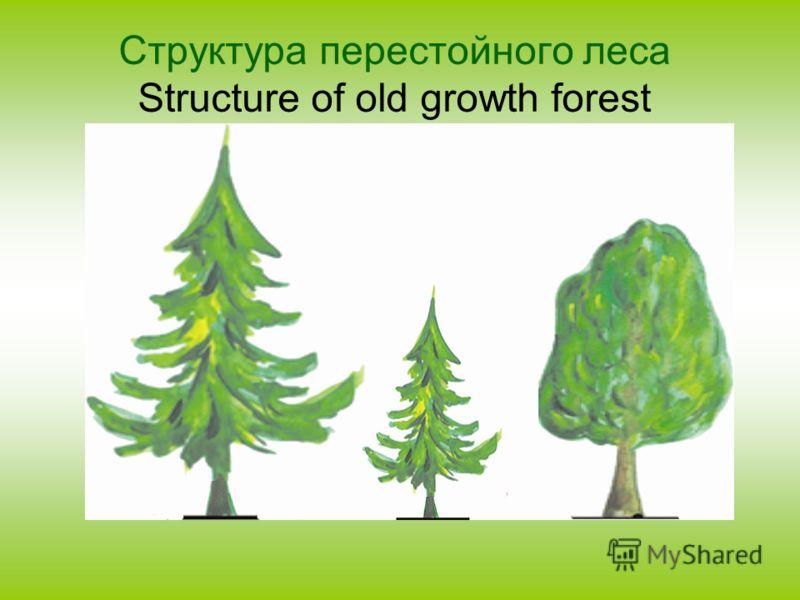 Структура перестойного леса Structure of old growth forest
