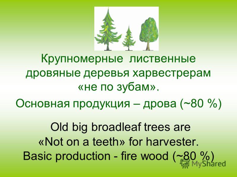 Крупномерные лиственные дровяные деревья харвестрерам «не по зубам». Основная продукция – дрова (~80 %) Old big broadleaf trees are «Not on a teeth» for harvester. Basic production - fire wood (~80 %)