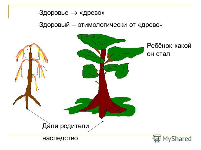 Здоровье «древо» Здоровый – этимологически от «древо » Дали родители наследство Ребёнок какой он стал