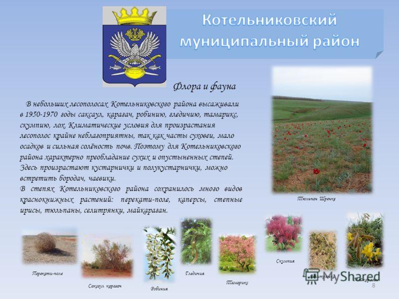 В небольших лесополосах Котельниковского района высаживали в 1950-1970 годы саксаул, карагач, робинию, гледичию, тамарикс, скумпию, лох. Климатические условия для произрастания лесополос крайне неблагоприятны, так как часты суховеи, мало осадков и си