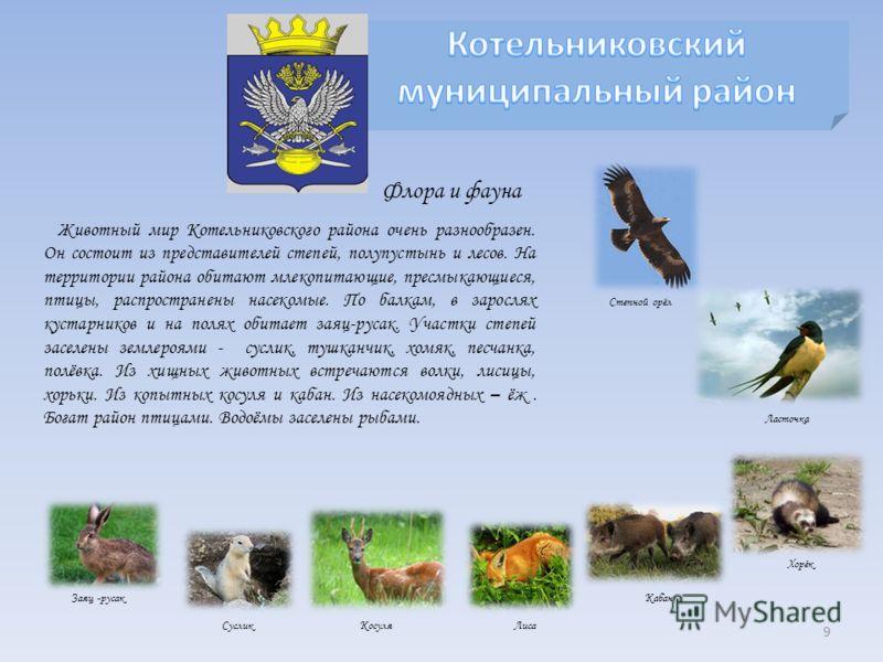 Животный мир Котельниковского района очень разнообразен. Он состоит из представителей степей, полупустынь и лесов. На территории района обитают млекопитающие, пресмыкающиеся, птицы, распространены насекомые. По балкам, в зарослях кустарников и на пол