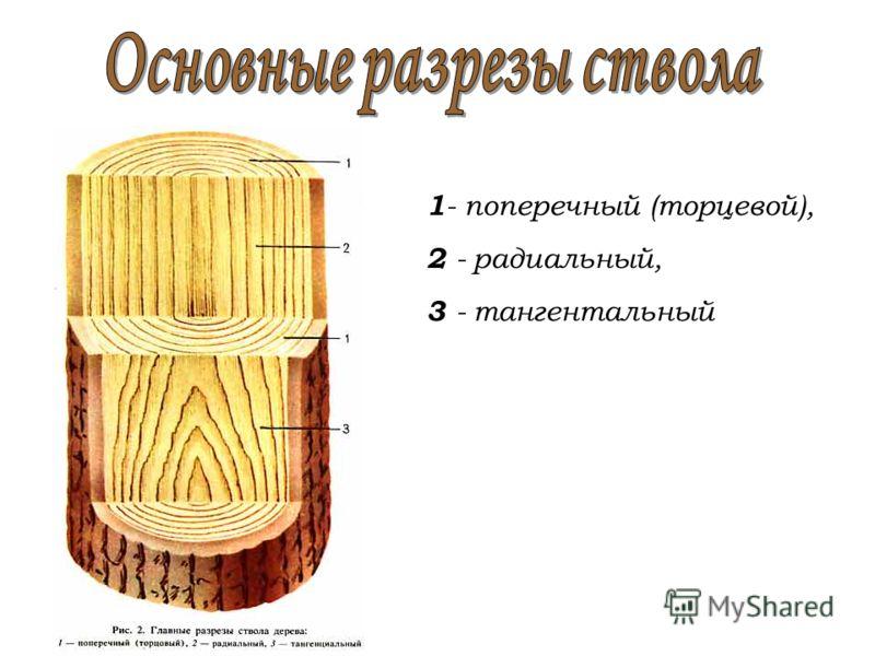 1 - поперечный (торцевой), 2 - радиальный, 3 - тангентальный