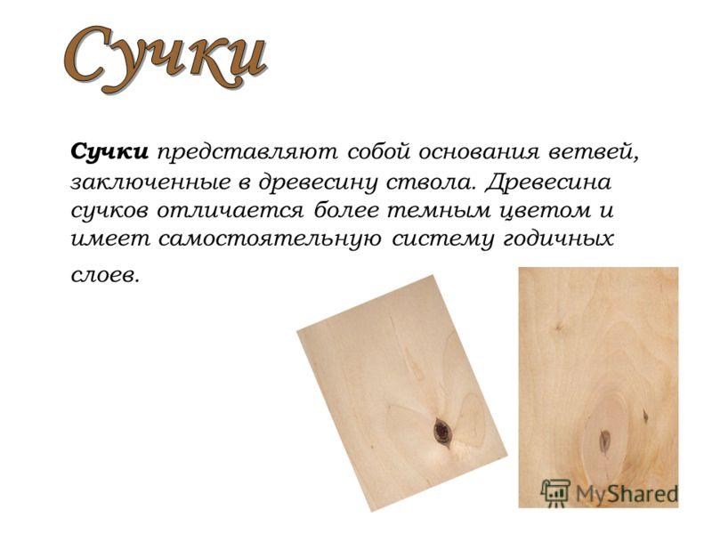 Сучки представляют собой основания ветвей, заключенные в древесину ствола. Древесина сучков отличается более темным цветом и имеет самостоятельную систему годичных слоев.
