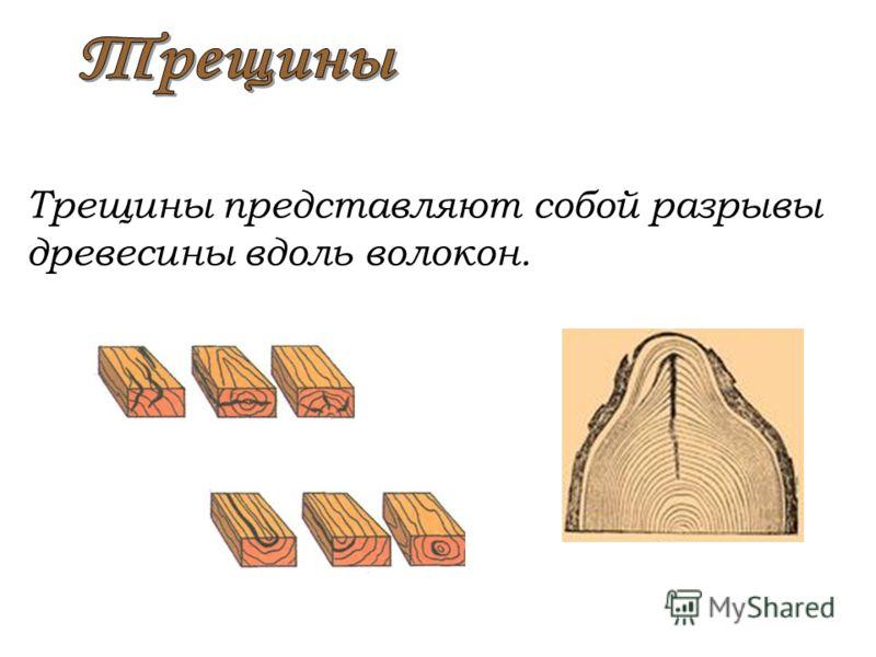 Трещины представляют собой разрывы древесины вдоль волокон.