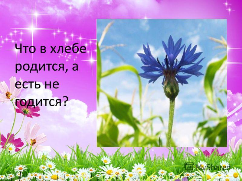 Что в хлебе родится, а есть не годится? 15