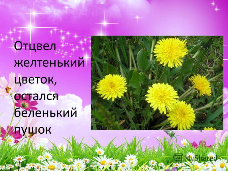 Отцвел желтенький цветок, остался беленький пушок 16