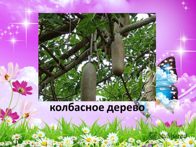 колбасное дерево 20