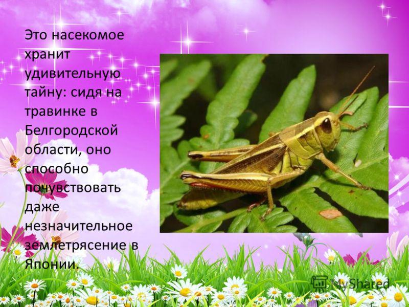 Это насекомое хранит удивительную тайну: сидя на травинке в Белгородской области, оно способно почувствовать даже незначительное землетрясение в Японии. 26