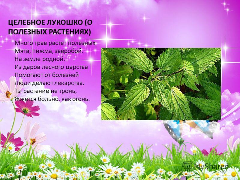 ЦЕЛЕБНОЕ ЛУКОШКО (О ПОЛЕЗНЫХ РАСТЕНИЯХ) Много трав растет полезных Мята, пижма, зверобой. На земле родной. Из даров лесного царства Помогают от болезней Люди делают лекарства. Ты растение не тронь, Жжется больно, как огонь. 40
