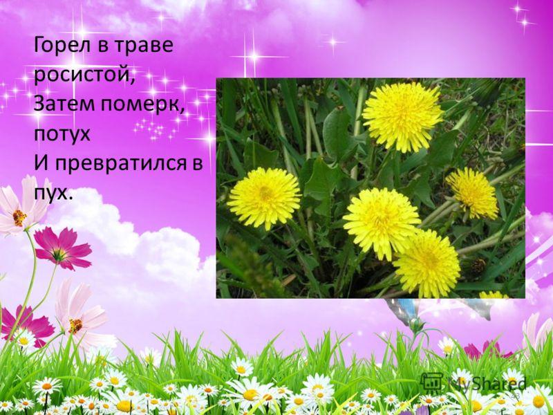 Горел в траве росистой, Затем померк, потух И превратился в пух. 43