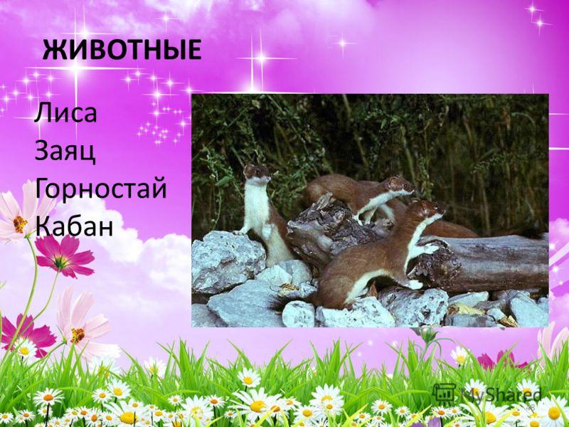 ЖИВОТНЫЕ Лиса Заяц Горностай Кабан 48