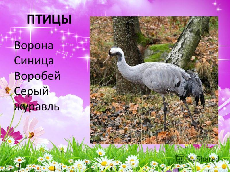 ПТИЦЫ Ворона Синица Воробей Серый журавль 49
