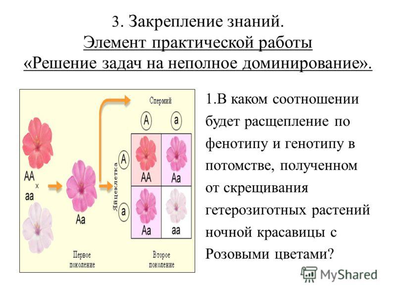 3. Закрепление знаний. Элемент практической работы «Решение задач на неполное доминирование». 1.В каком соотношении будет расщепление по фенотипу и генотипу в потомстве, полученном от скрещивания гетерозиготных растений ночной красавицы с Розовыми цв