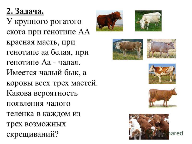 2. Задача. У крупного рогатого скота при генотипе АА красная масть, при генотипе аа белая, при генотипе Аа - чалая. Имеется чалый бык, а коровы всех трех мастей. Какова вероятность появления чалого теленка в каждом из трех возможных скрещиваний?