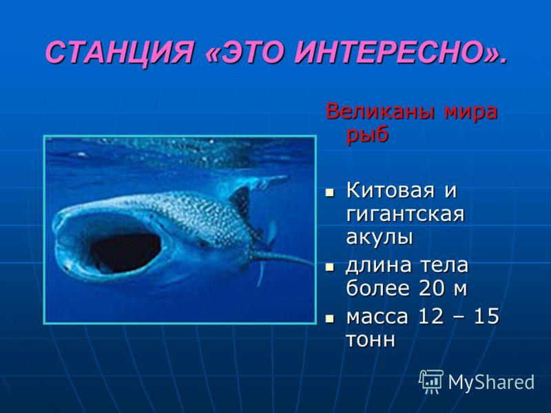 СТАНЦИЯ «ЭТО ИНТЕРЕСНО». Великаны мира рыб Китовая и гигантская акулы Китовая и гигантская акулы длина тела более 20 м длина тела более 20 м масса 12 – 15 тонн масса 12 – 15 тонн