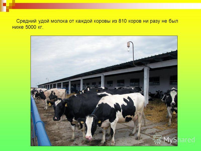 Средний удой молока от каждой коровы из 810 коров ни разу не был ниже 5000 кг.