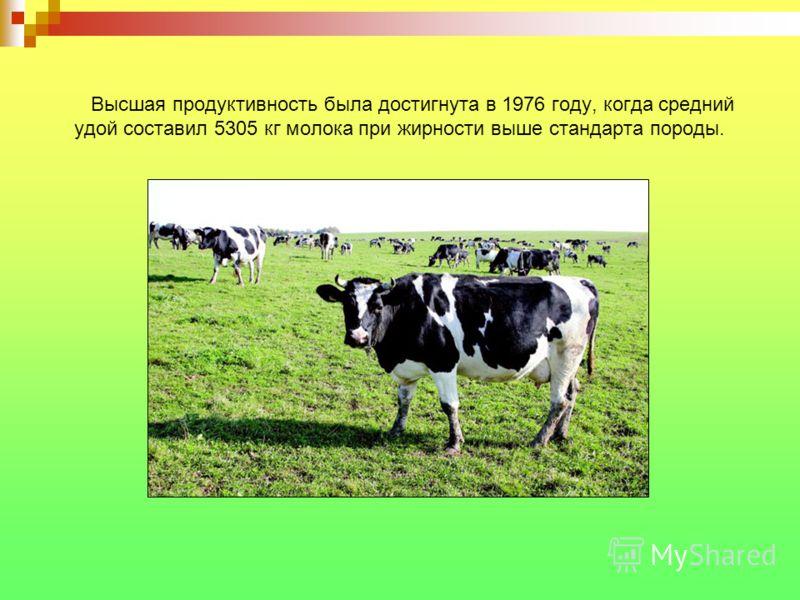 Высшая продуктивность была достигнута в 1976 году, когда средний удой составил 5305 кг молока при жирности выше стандарта породы.